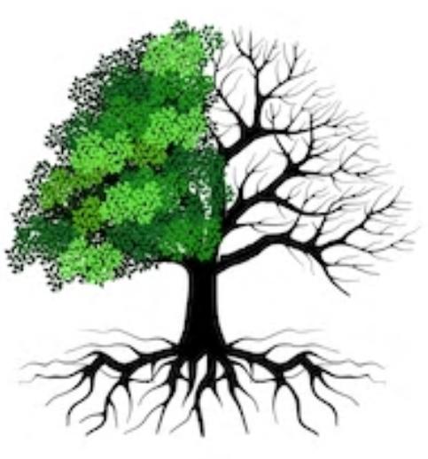 Waarde van levende bomen